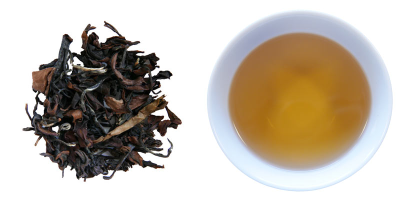 Oolong te Butterfly of Taiwan